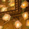 Cabbage Rose - 20 Lamps